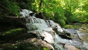 森林小河和瀑布 免版税库存图片