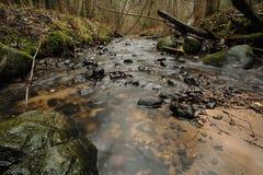 森林小河在与长的曝光的秋天 库存图片