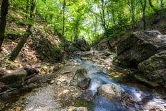 森林小河在夏天 免版税库存图片