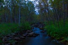 森林小河在晚上 免版税库存照片