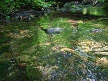 森林小河在森林 库存图片