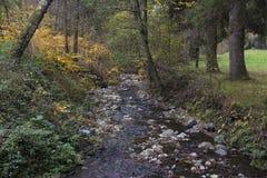 森林小河在秋天 库存图片