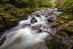 森林小河在Tollymore公园 库存图片