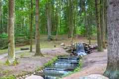 森林小河当前vteni高大的树木 免版税库存照片
