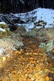 森林小河的波纹 库存图片