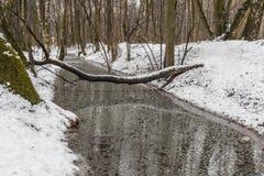 森林小河,下落的树,绿色青苔 图库摄影