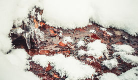 冻森林小河 你好, 2月! 免版税图库摄影