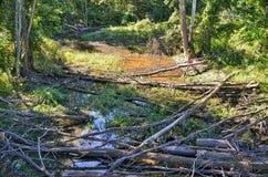 森林小河 库存图片