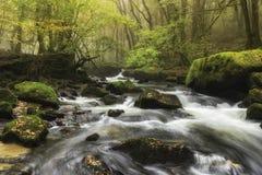 森林小瀑布 图库摄影