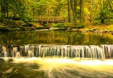 森林小的瀑布 库存图片
