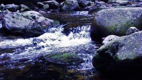 森林小的瀑布 图库摄影