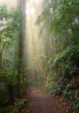 森林小雨 免版税库存照片