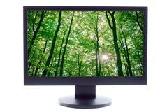 森林屏幕电视 库存照片