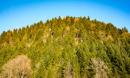 森林山坡以春天绿色 免版税库存图片