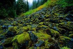 森林山坡 免版税库存照片