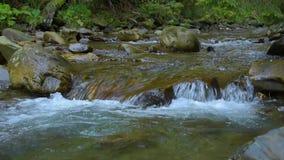 森林山河 影视素材