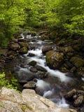 森林山流夏天 免版税库存照片