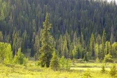 森林山腰 免版税库存照片