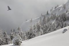 森林山阴云密布风景天空多雪的冬天 用在一个山坡的雪盖的杉树在一场轻的雾和飞鸟 库存图片