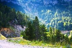 森林山风景 免版税库存照片