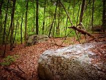 森林岩石 库存图片