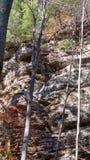 森林岩石 免版税库存图片