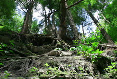 森林峡谷 库存图片