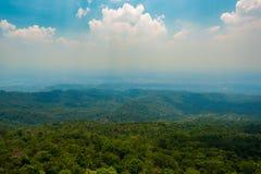 森林峰顶 免版税图库摄影