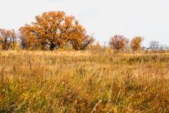 森林干草原区域洪泛区草甸  库存照片