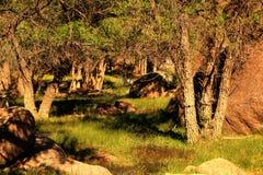 森林幽谷 免版税库存图片