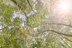 森林底视图和透镜火光绿化树自然室外公园 免版税图库摄影