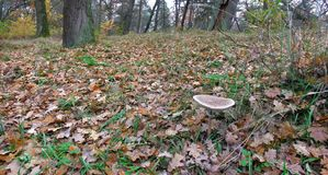 森林废弃物的全景图象在秋天森林里在10月 免版税库存照片