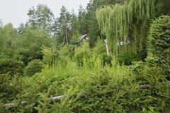 森林庭院 免版税库存图片