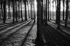 森林影子 免版税库存图片