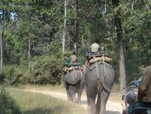 森林徒步旅行队 库存照片