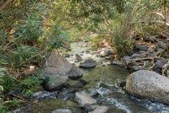 森林戈兰高地的六角形河在以色列 库存照片