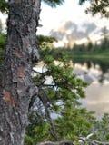 森林成长 库存照片