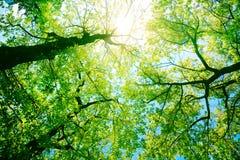 森林或公园树在阳光下 库存图片