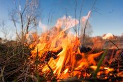 森林或领域火 树被烧成灰烬很多火,当vildfire 免版税库存图片