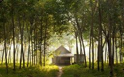 森林房子一点 免版税图库摄影