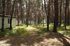 森林房子 库存照片