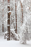 森林房子starling的结构树冬天 免版税图库摄影