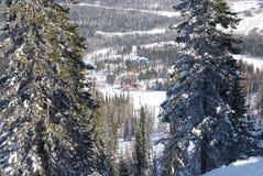 森林手段冬天 库存照片