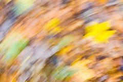 森林抽象 秋季森林长的曝光照片  免版税库存图片