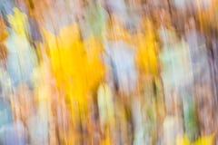 森林抽象 秋季森林长的曝光照片  免版税库存照片