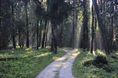 森林探险队 库存图片