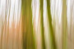 森林摘要被弄脏的背景 库存照片