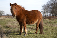 森林新的小马 免版税库存图片