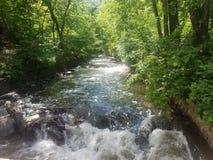 森林方式河 库存照片