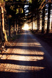 森林方式 库存照片